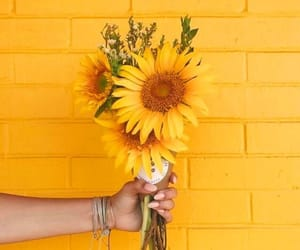 blossom, colorful, and sunflowers image