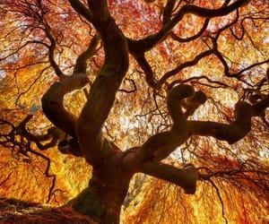 tree, nature, and orange image