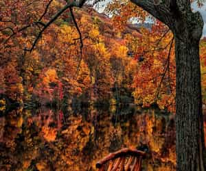 tumblr, autumn, and forest image
