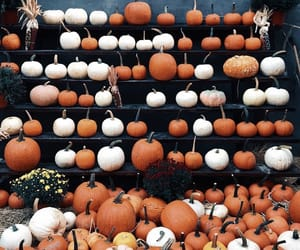 autumn, orange, and pumpkins image