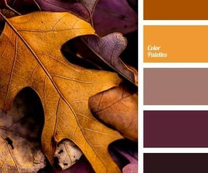 beautiful, fall, and inspo image