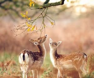 animals, trees, and doe image