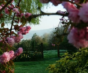 spring, flowers, and garden image