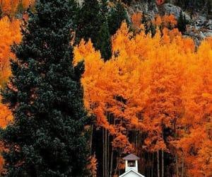 autumn, orange, and leafs image
