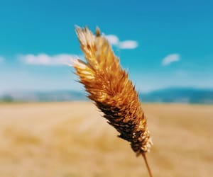 blue sky, hand, and wheat spike image