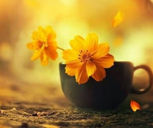 cup, yellow flowers, and flores image