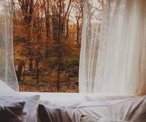 autumn, leaves, and bed image