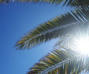 blue, palm, and sky image