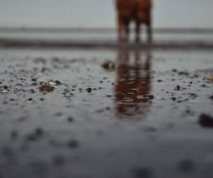 always, beach, and life image