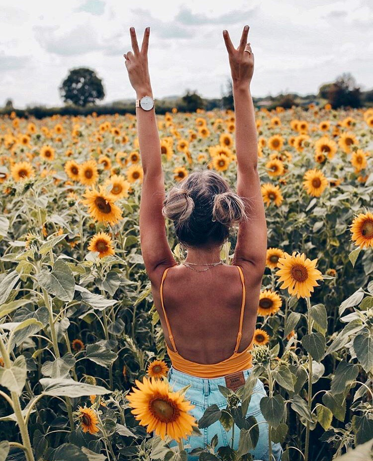 germany, sunflowers, and nature image
