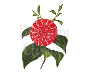 camellia, flower illustration, and red flowers image