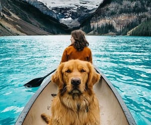 amazing, blue, and dog image