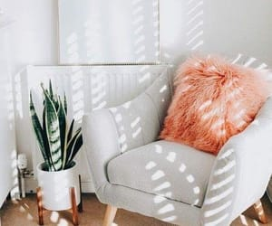 chair, plant, and white image