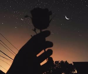 aesthetic, rose, and alone image