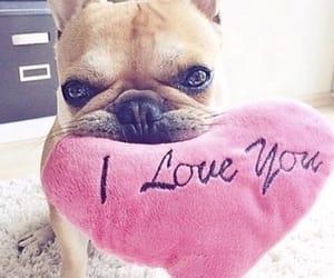 animal, love, and pet image