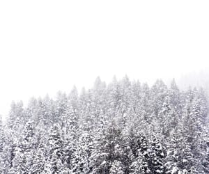 minimal, white, and trees image