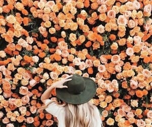 autumn, fall, and roses image