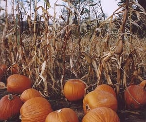 autumn, dark, and november image
