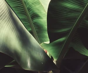 aesthetic, leaf, and green image