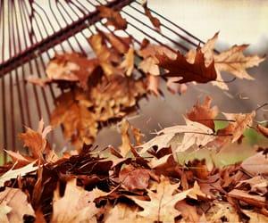 autumn, fall, and seasons image