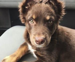 animals, carefree, and dog image
