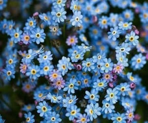 blue, flowers, and baby_flowers image