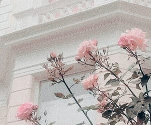 aesthetic, peachy, and roses image