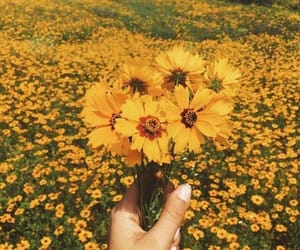 aesthetics, flower, and nature image