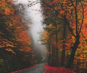 autumn, fog, and orange image