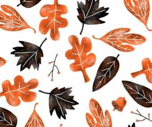 autumn, orange, and background image