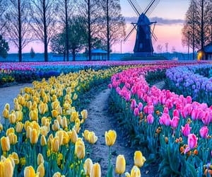 colorful, flowers, and landscape photography image