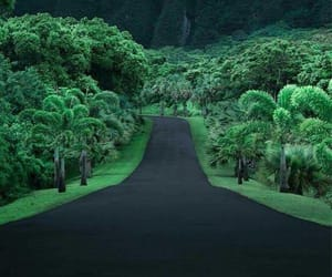 forest, hawaii, and nature image