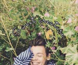 wallpaper and harrystyles image