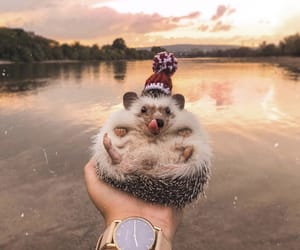animals, nature, and hedgehog image