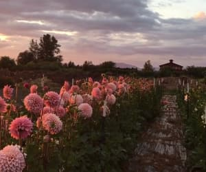 aesthetic, country, and flower image