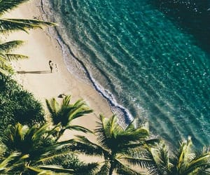 beach, palm tree, and paradise image