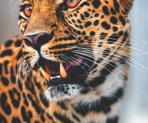 Animales, naturaleza, and leopardo image
