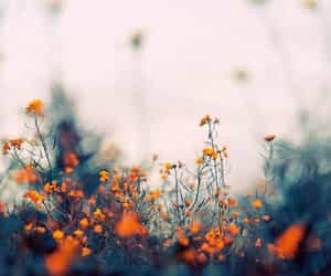 autumn, flowers, and nature image