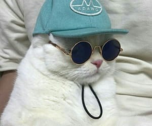 cat, animal, and cool image
