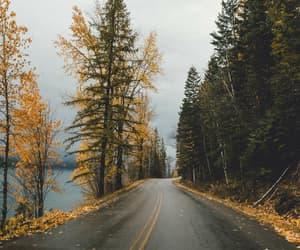 adventure, autumn, and fog image