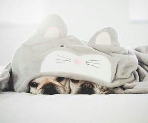 dog, morning, and nap image