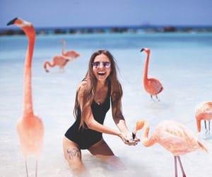 beach, flamingo, and ocean image