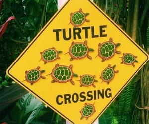 turtle, yellow, and sign image