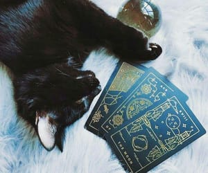 cat, tarot, and witch image