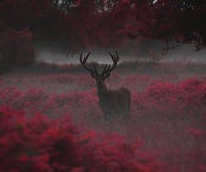 wild nature image