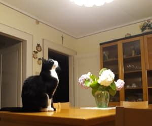 black, cat, and roses image