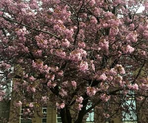 nature, pink, and sping image