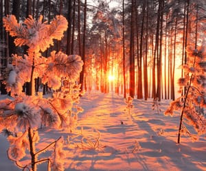 snow, forest, and sunset image