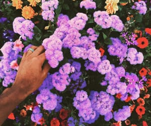 flowers and tyler the creator image