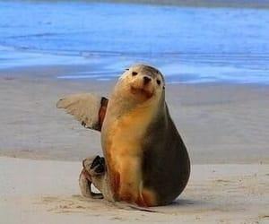 animal, beach, and seal image
